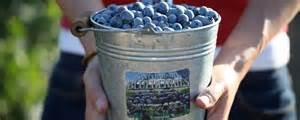 Santa Barbara Blueberries