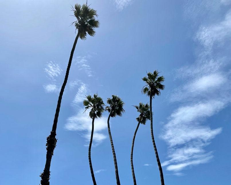 Hope Ranch Palms